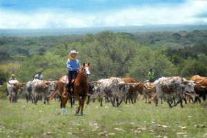 Texas-Ranch-2